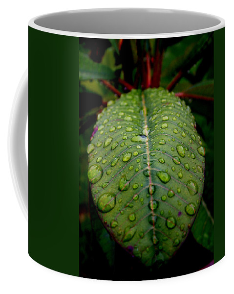 Leaf Coffee Mug featuring the photograph Quenched by David Weeks