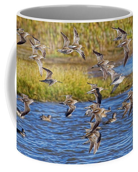 Flight Coffee Mug featuring the photograph Racing Stripes by Gary Holmes