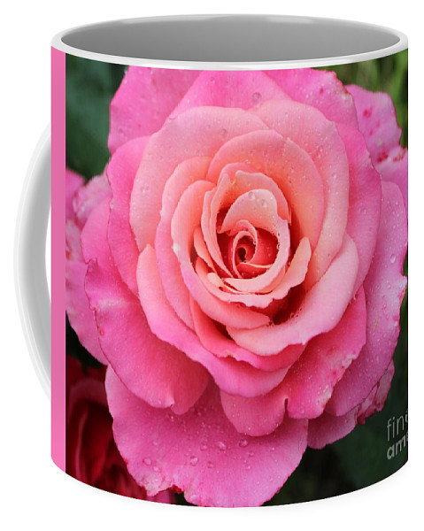 Rain Drenched Rose Coffee Mug featuring the photograph Rain Drenched Rose by Barbara Griffin