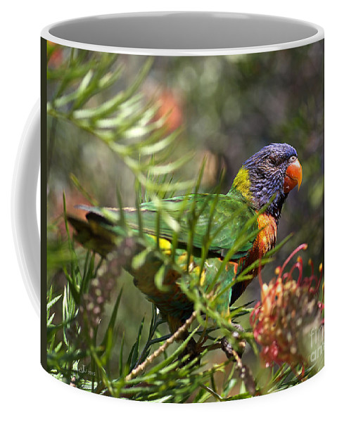 Rainbow Lorikeet Coffee Mug featuring the photograph Rainbow Lorikeet by Joy Watson