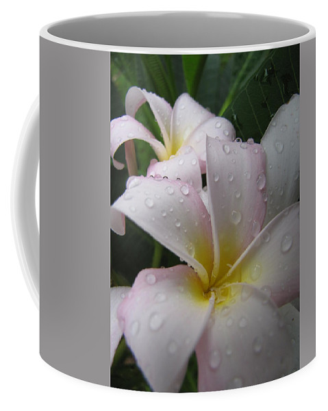 Plumeria Coffee Mug featuring the photograph Raindrops by Beth Vincent