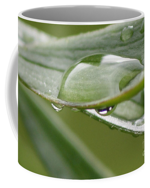 Raindrop Coffee Mug featuring the photograph Raindrops by Carol Lynch