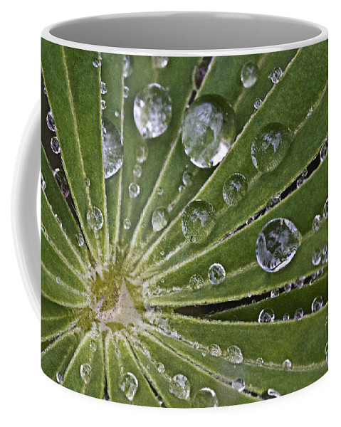 Drop Coffee Mug featuring the photograph Raindrops On Lupin Leaf by Heiko Koehrer-Wagner