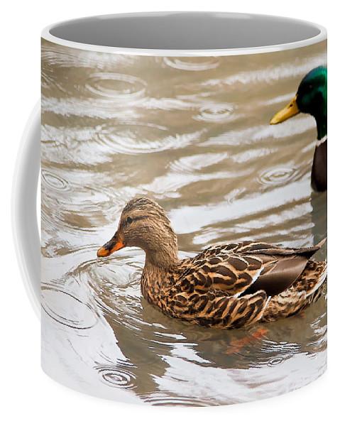 Dan Sabin Coffee Mug featuring the photograph Rainy Day Mallard Hen by Dan Sabin