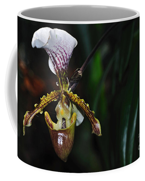 Photography Coffee Mug featuring the photograph Rare Orchid - Paphiopedilum Gratrixianum by Kaye Menner