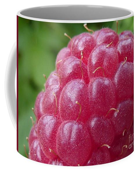 Raspberry Coffee Mug featuring the photograph Raspberry by Rain Shine