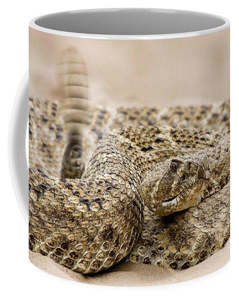 Rattlesnake Coffee Mug featuring the photograph Rattlesnake 1 by Jerry Fornarotto