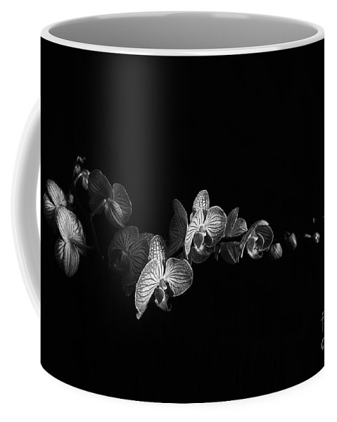 Orchids Coffee Mug featuring the photograph Reaching For The Light by Randi Grace Nilsberg