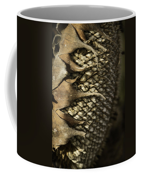 Sunflower Head Coffee Mug featuring the photograph Ready For Winter by Thomas Young