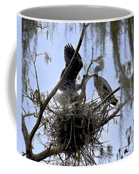 Heron Coffee Mug featuring the photograph Ready To Fly by Carol Bradley