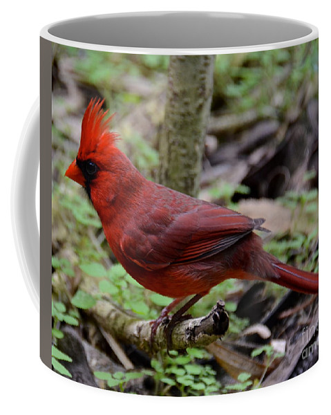Bird Coffee Mug featuring the photograph Really Red by Carol Bradley