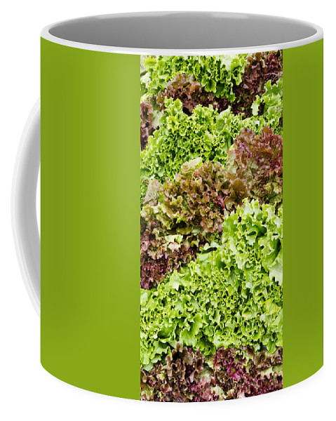 Agriculture Coffee Mug featuring the photograph Red And Green Leaf Lettuce by John Trax