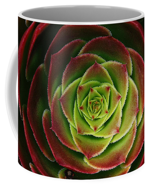 Succulent;red Coffee Mug featuring the photograph Red And Green by Robert Woodward