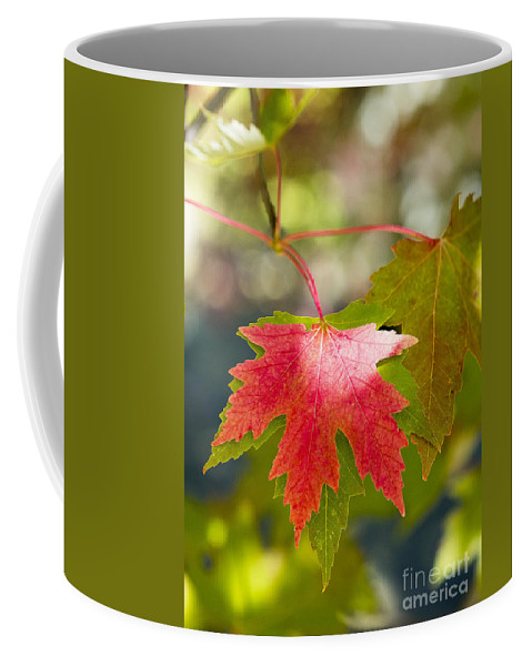 Arboretum Coffee Mug featuring the photograph Red And Green by Steven Ralser