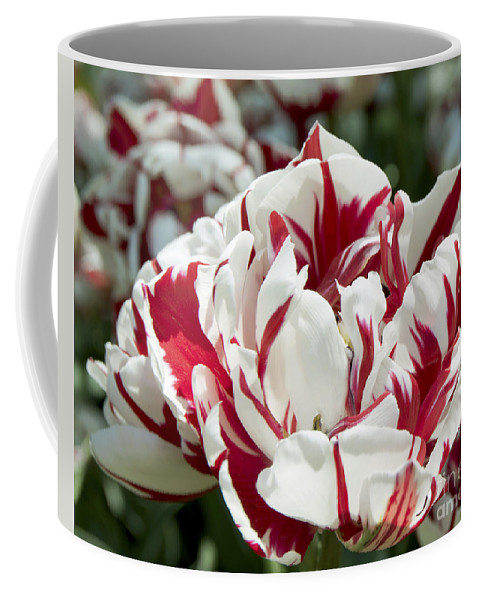 Spring Coffee Mug featuring the photograph Red And White 6393 by Terri Winkler