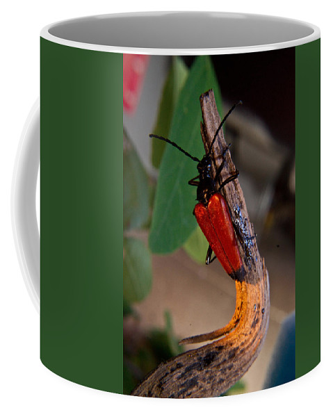 Red Coffee Mug featuring the photograph Red Beetle Rising by Douglas Barnett