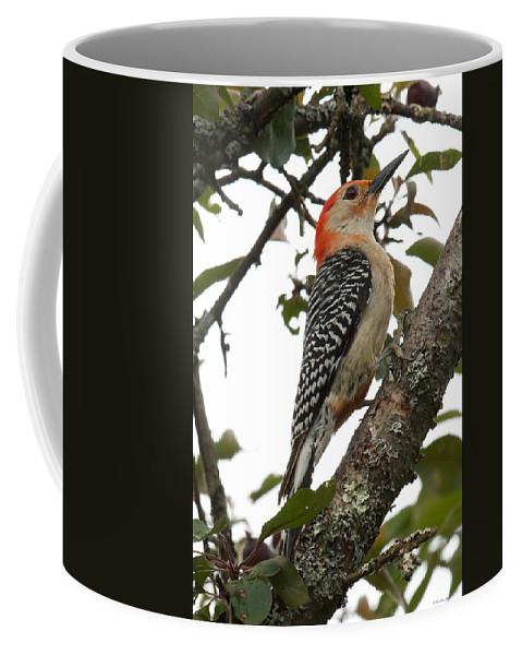 Birds Coffee Mug featuring the photograph 'red-bellied Woodpecker' Melanerpes Carolinus by Kristin Hatt