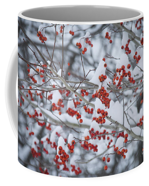 Berries Coffee Mug featuring the photograph Red Berries by Alana Ranney