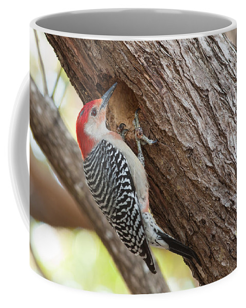 Woodpecker Coffee Mug featuring the photograph Red-bellied Woodpecker by Paul Rebmann