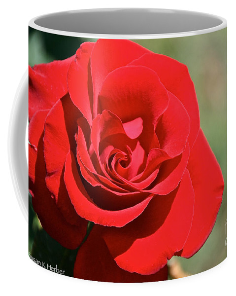 Flower Coffee Mug featuring the photograph Red Carpet Rose by Susan Herber