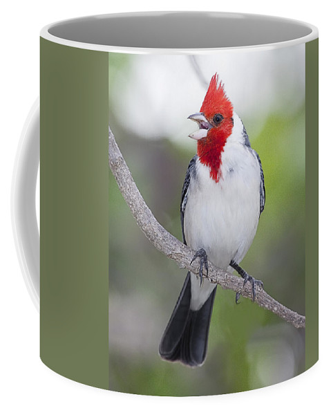 Red Crested Cardinal Coffee Mug featuring the photograph Red Crested Cardinal by John Vose