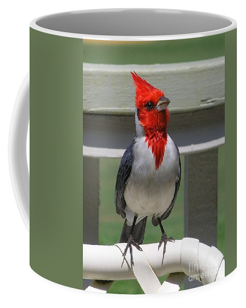 Birds Coffee Mug featuring the photograph Red Crested Cardinal by Mary Deal