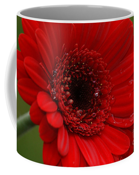 Red Coffee Mug featuring the photograph Red Daisy by Carol Lynch