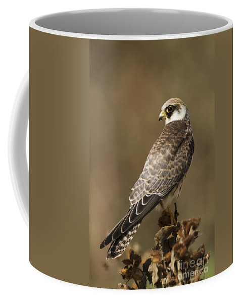 Bird Of Prey Coffee Mug featuring the photograph Red Footed Falcon Falco Vespertinus by Eyal Bartov