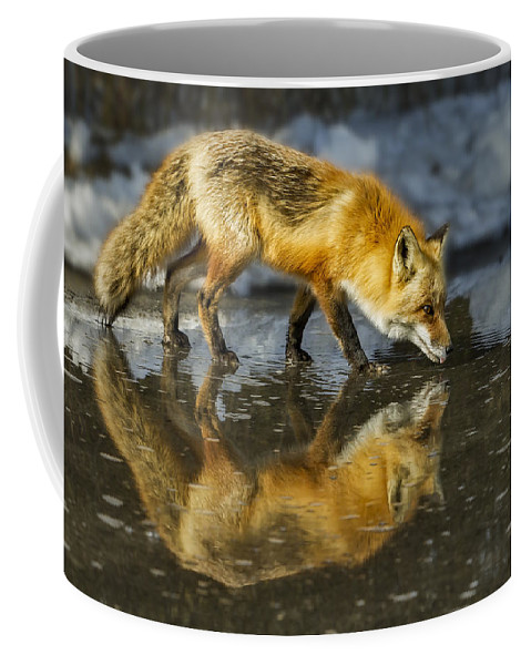 Red Fox Coffee Mug featuring the photograph Red Fox Has A Drink by Susan Candelario