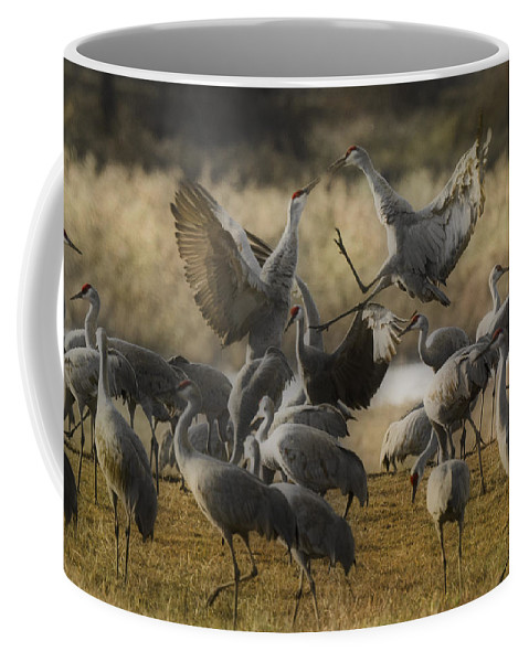 Red Headed Tempers Coffee Mug featuring the photograph Red Headed Tempers by Wes and Dotty Weber