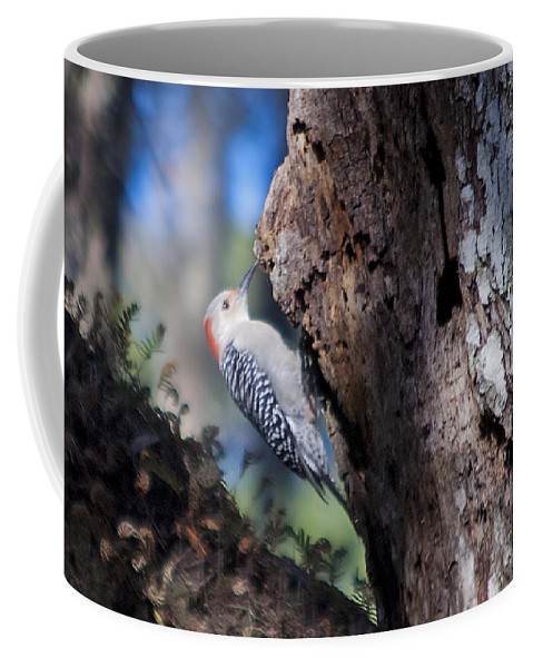 Wildlife Coffee Mug featuring the photograph Red Headed Woodpecker by Kenneth Albin