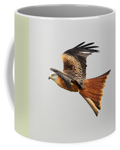 Accipitridae Coffee Mug featuring the photograph Red Kite Soaring by Grant Glendinning