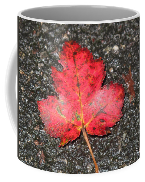Leaves Coffee Mug featuring the photograph Red Leaf On Pavement by Barbara McDevitt