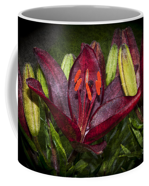 Lilium Coffee Mug featuring the photograph Red Lily 5 by Steve Purnell