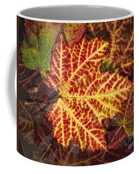 Maple Coffee Mug featuring the photograph Red Maple Leaf by Claudia Kuhn
