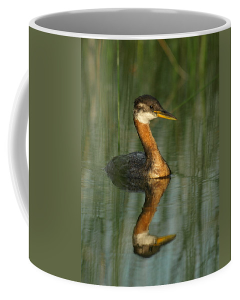 Peterson Nature Photography Coffee Mug featuring the photograph Red-necked Grebe by James Peterson