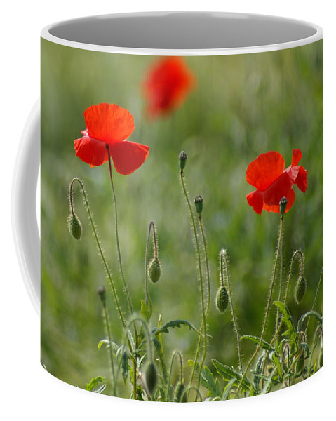 Poppies Coffee Mug featuring the photograph Red Poppies 2 by Carol Lynch