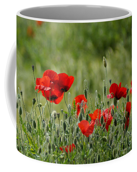 Poppies Coffee Mug featuring the photograph Red Poppies 3 by Carol Lynch