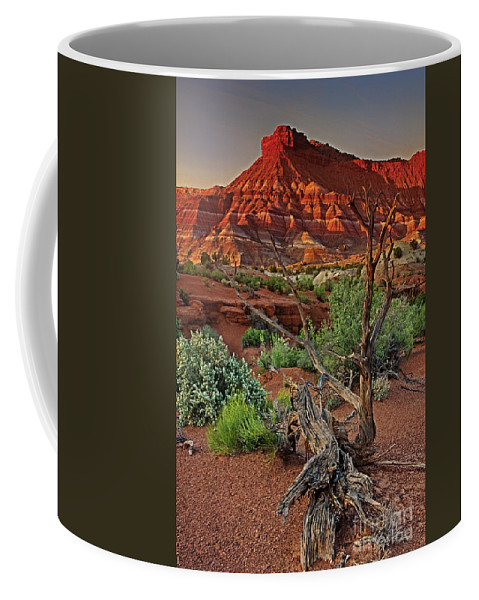 North America Coffee Mug featuring the photograph Red Rock Butte And Juniper Snag Paria Canyon Utah by Dave Welling