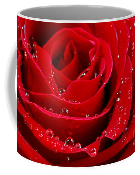 Red Coffee Mug featuring the photograph Red Rose by Elena Elisseeva