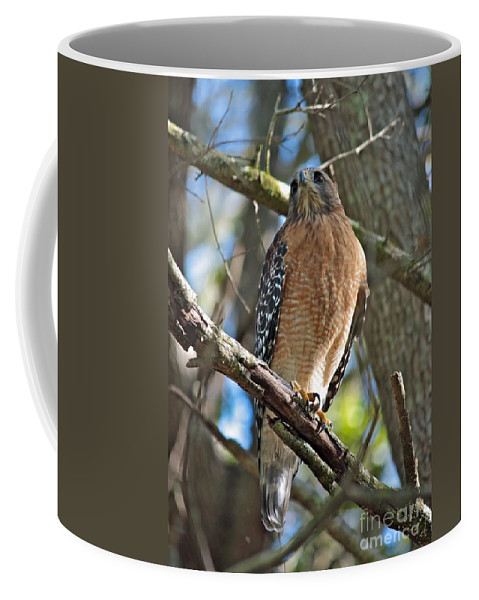 Hawk Coffee Mug featuring the photograph Red-shouldered Hawk On Branch by Carol Groenen