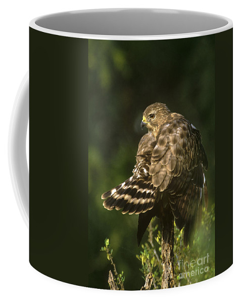 Red-shouldered Hawk Coffee Mug featuring the photograph Red-shouldered Hawk Wild Texas by Dave Welling