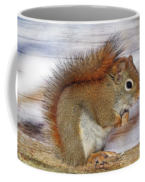 Squirrel Coffee Mug featuring the photograph Red Squirrel by FL collection