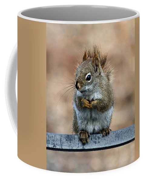 Squirrel Coffee Mug featuring the photograph Red Squirrel On Patio Chair II by Jeff Galbraith