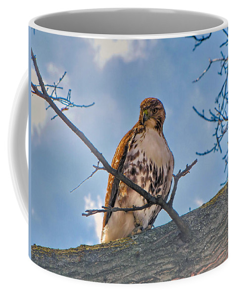 Hawk Coffee Mug featuring the photograph Red-tailed Hawk by C H Apperson