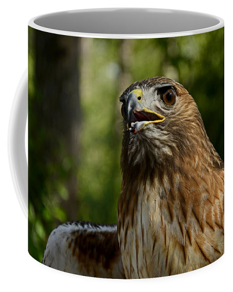 Bird Coffee Mug featuring the photograph Red Tailed Hawk by Eric Albright