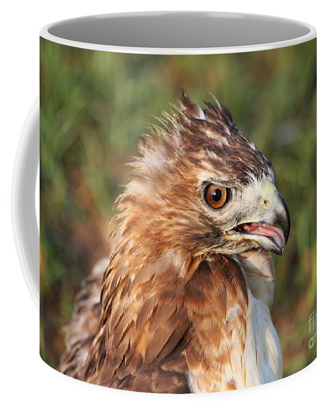 Red Tailed Hawk Coffee Mug featuring the photograph Red Tailed Hawk by TN Fairey