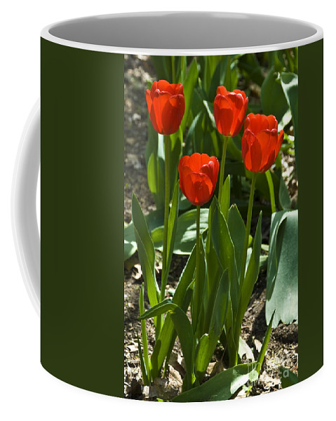 Flower Coffee Mug featuring the photograph Red Tulips by Anthony Sacco