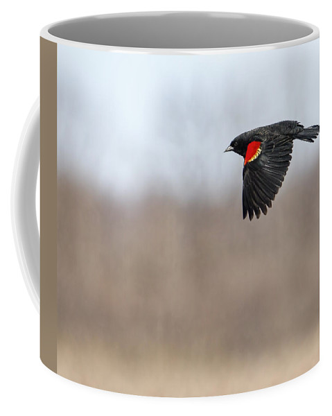 Red-winged Blackbird Coffee Mug featuring the photograph Red-winged Blackbird In Flight by Thomas Young