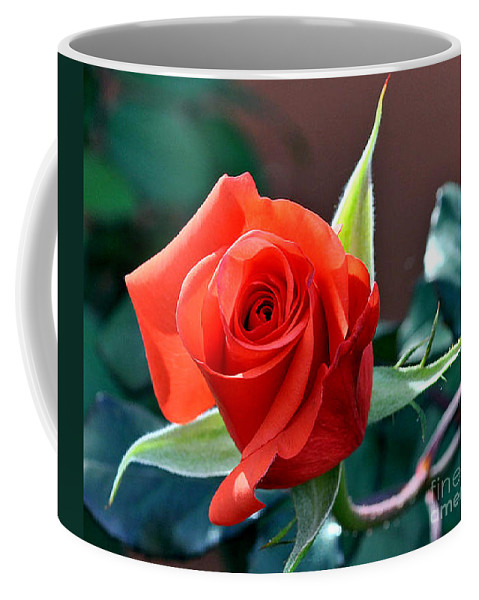 Flower Coffee Mug featuring the photograph Reddish Pink Rose by Jay Milo